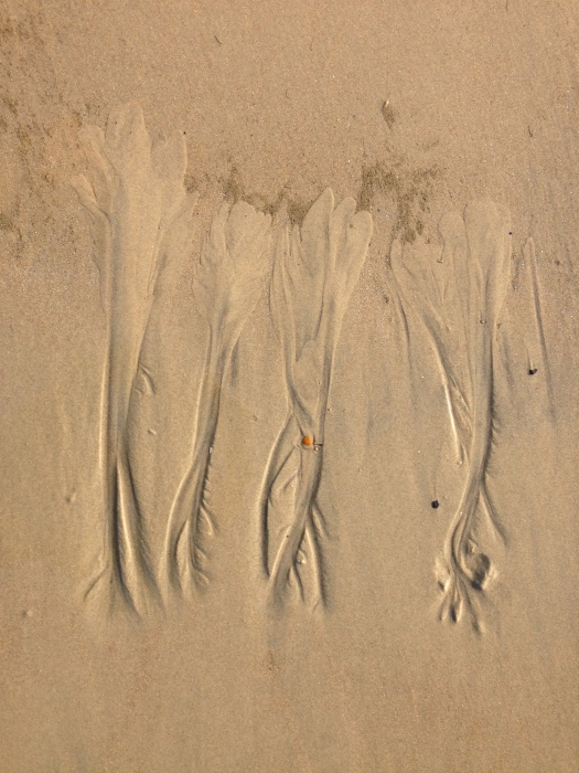 Marks on the sand.