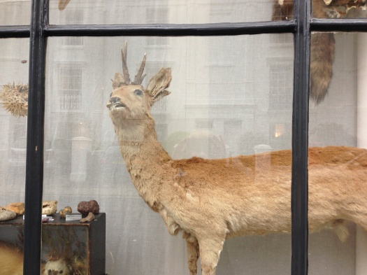 Brighton window